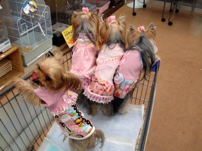 お買い物4人娘