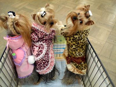 お買い物3人娘