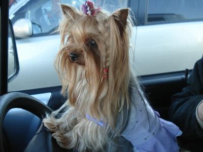 マリさんの運転です