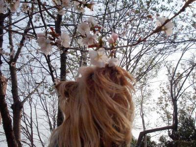 桜は食べないでね