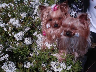 白いお花とマリラビ