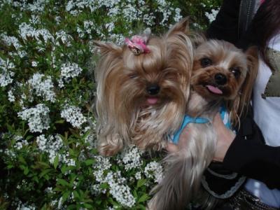 白いお花とグリアイ