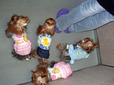 エレベーターで4人娘