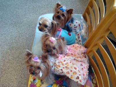 横から4人娘