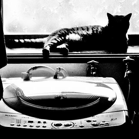 奴と洗濯機