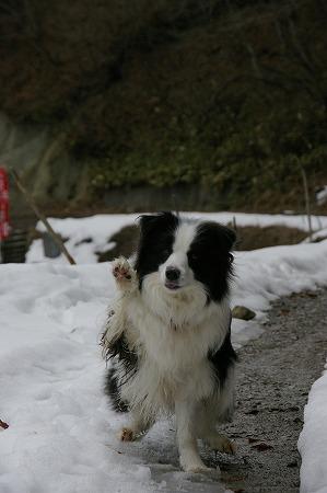 招き犬フィービー