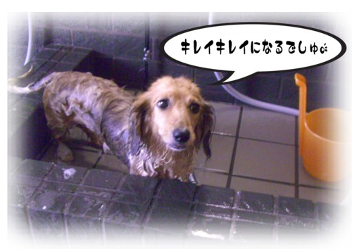 2DSC_9368.jpg