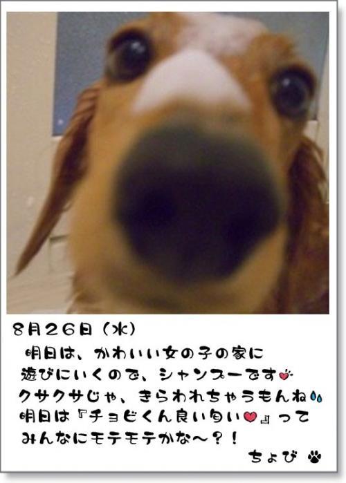 3DSC_0091.jpg