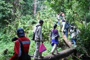 ジャングル散策