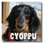 blog-cyoppu.jpg