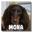 blog-mona.jpg