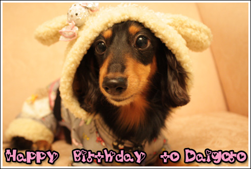 Happy Birthday to Daigoro