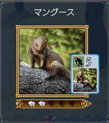 マングース