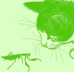 マウス描画コネコとカマキリ