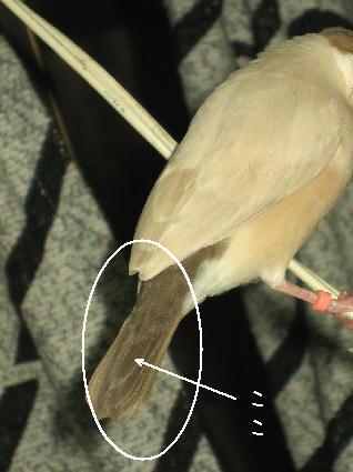 タラコの尻尾
