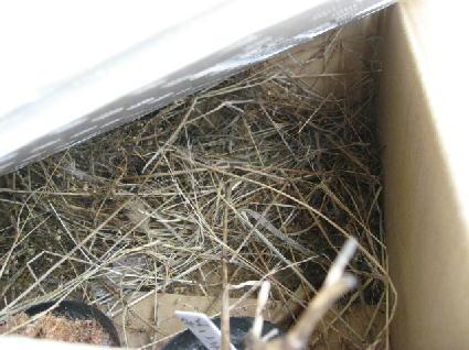 すずめの巣