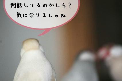 何話してるの?