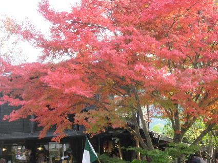 湯布院紅葉
