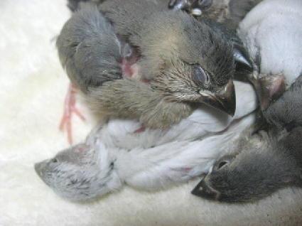 鳥を枕にする(笑)