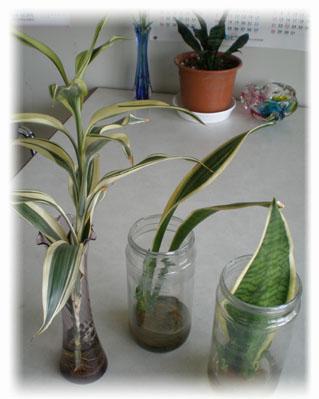 植えかえする植物たち