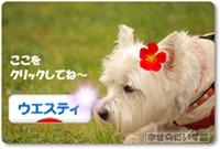 DPP_0306-001エンド