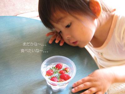 イチゴを眺める茜1