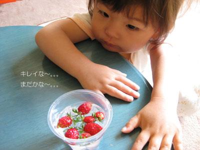 イチゴを眺める茜2