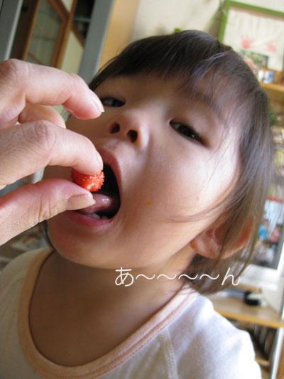 イチゴを食す茜