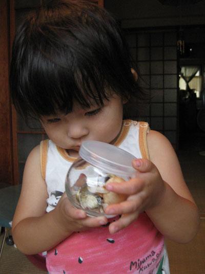 貝を見つめる茜1