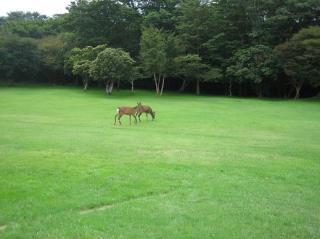 鹿と天城高原ゴルフコース