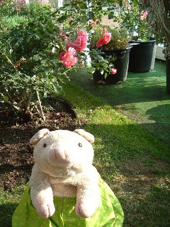 豚とバラと……豚とバラと