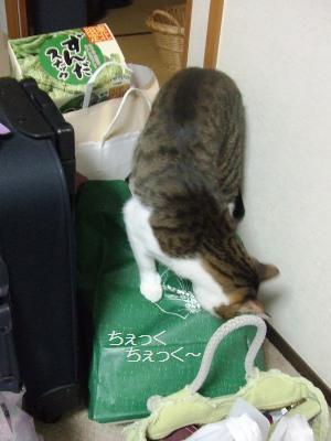 荷物ちぇーっく