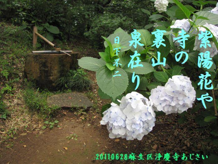 0628ajisai5