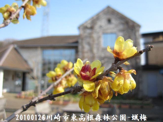 100129higashi02