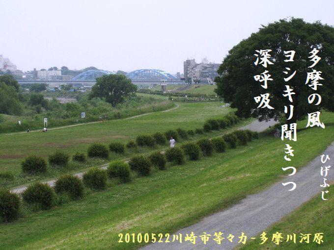 100522tamagawa05