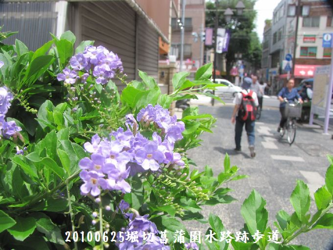 100625suiro-hana02