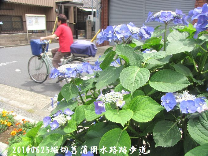 100625suiro-hana05