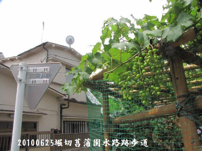 100625suiro-hana06