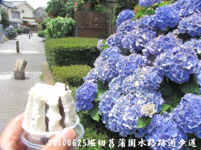 100625suiro-hana07