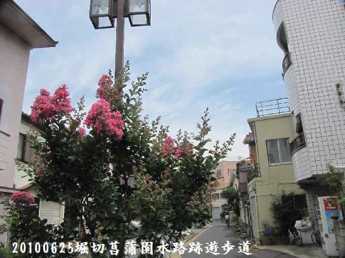 100625suiro-hana09