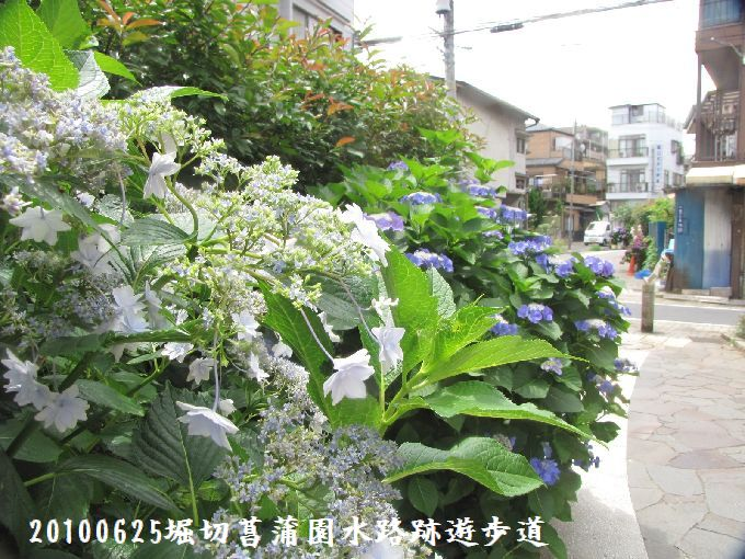 100625suiro-hana11