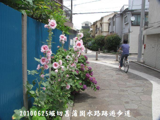 100625suiro-hana12