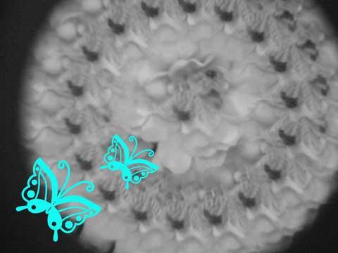 蝶と加工の花