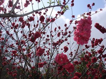 虹の郷の花その1