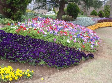 虹の郷の花その2