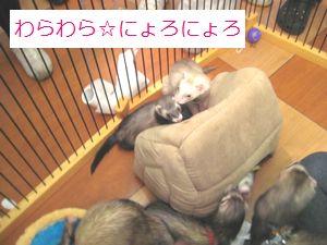 IMG_4781_1.jpg