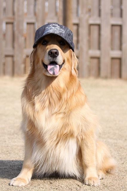 なっちゃん帽子