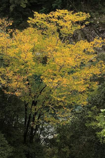 IMG_4483杉安峡の紅葉