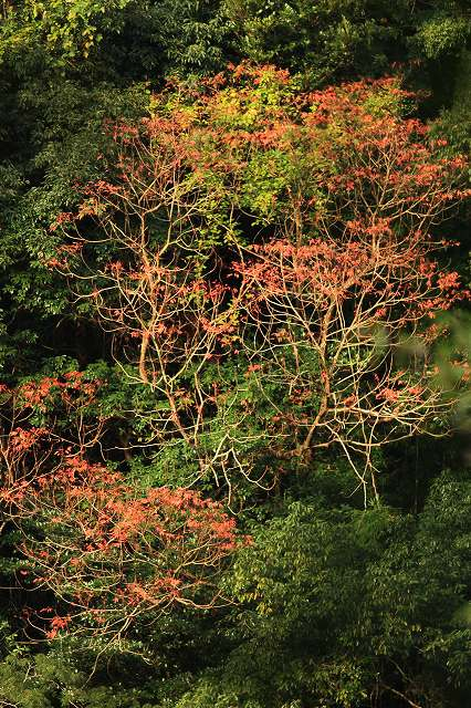 IMG_5112杉安峡の紅葉