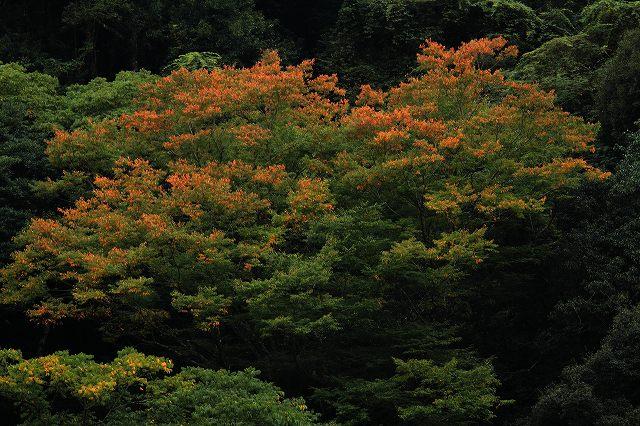 IMG_5118杉安峡の紅葉